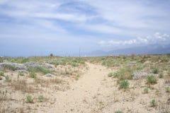 Sandig vegetation Royaltyfri Bild