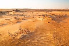 Sandiga dyn i öknen nära Abu Dhabi Royaltyfri Bild