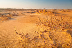 Sandiga dyn i öknen nära Abu Dhabi Royaltyfri Fotografi