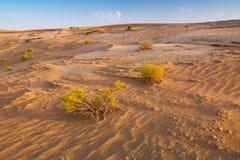 Sandiga dyn i öknen nära Abu Dhabi Arkivbilder