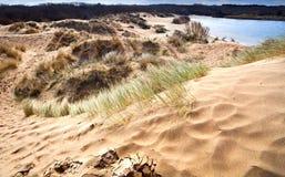 Sandiga dyner i Haarlem, Nederländerna Arkivfoto