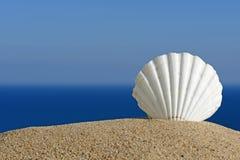 sandiga skal för strand Arkivbilder