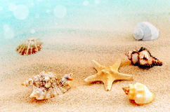 sandiga skal för strand Arkivfoto