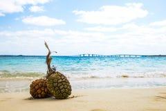 Sandiga stränder och tropisk bild Arkivbilder