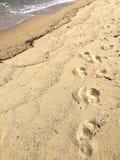 sandiga strandfotspår Fotografering för Bildbyråer