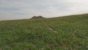 Sandige Berge und Gras des Sommers stock video footage