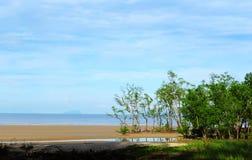 Sandiger Mangrovenstrand Sarawaks Stockbilder