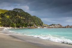 Sandiger Strand der Pohutukawa-Baumfranse Lizenzfreie Stockbilder