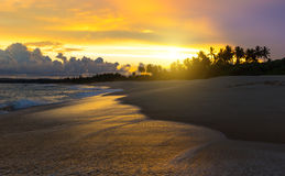 Sandiger Strand des Sommers mit Palmen im Sonnenuntergang Stockfoto