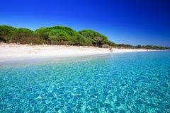 Sandiger Strand Palombaggia mit Kiefern und azurblauem klarem Wasser, Korsika, Frankreich lizenzfreies stockfoto