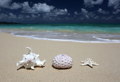 Sandiger Strand Seeoberteil-Seeigel-Oberteil Starfish Stockfoto
