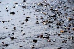 Sandkiesel-Seeuferstrand Stockbilder