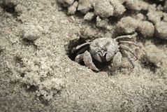 Sandkrabba på stranden nära hålan Royaltyfri Bild