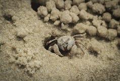 Sandkrabba på stranden nära hålan Arkivfoto