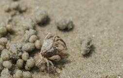 Sandkrabba på stranden nära hålan Fotografering för Bildbyråer