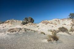 Sandlilja på en medelhavs- dyn Fotografering för Bildbyråer