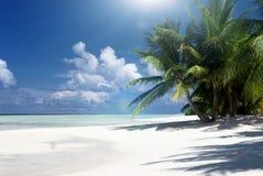 Sandön med kokosnöten gömma i handflatan Arkivbild