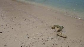 Sandpappra stranden på den berömda turist- gränsmärket Hong Lagoon, Hong Island Bay i det Krabi landskapet, Thailand Vatten Cryst stock video