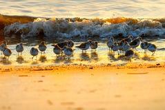 Sandpipblåsare royaltyfria foton