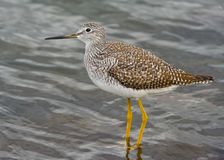 Sandpiper Stock Photo