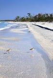 Sandpipers i Beachgoers Obraz Royalty Free
