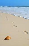 Sandprints and Shell by Shore. Footprints in the sand walking along seashell at seashore Royalty Free Stock Photos