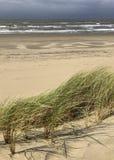 Sandrör i sanddyerna på sätter på land han, regnig molnig himmel på kusten av Nederländerna arkivbilder