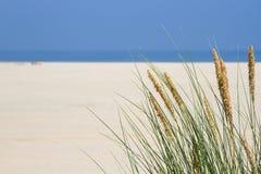 Sandrör på sjösidan Arkivbilder