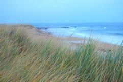 Sandrör på stranden Arkivfoto