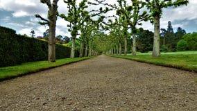 Sandringham trädgård 2017 kan Royaltyfri Fotografi