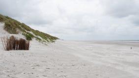 Sandrör i dyn på Ameland Royaltyfri Fotografi