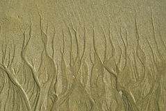 Sands texture like tree. On the beach Royalty Free Stock Image