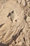 Sandschildkröte Stockfotografie