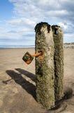 Sandsend Groynes - Sandsend Royalty Free Stock Image
