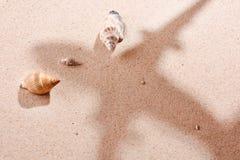sandskal Royaltyfri Foto
