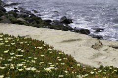 Sandslinga och hav Royaltyfri Fotografi