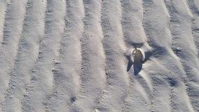 Sandstång Shell Royaltyfri Foto