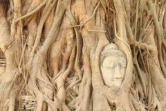 Sandstein-Buddha-Kopf Lizenzfreies Stockfoto
