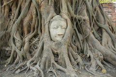 Sandstein-Buddha-Kopf innerhalb der Baumwurzel Lizenzfreies Stockbild