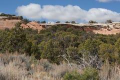 Sandstein-Leiste mit Pinyon-Wacholderbusch Ecysytem Lizenzfreies Stockbild