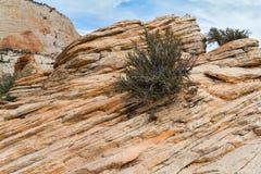 Sandstein mit dem Busch auf ihm, Utah Stockbild