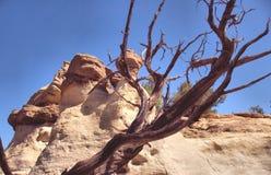 Sandstein-Unglücksboten und Cedar Tree Stockfotos