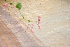 Sandsteinbeschaffenheit lizenzfreie stockbilder