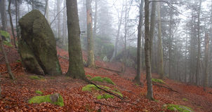 Sandsteinfelsen im nebelhaften Wald Lizenzfreie Stockfotos