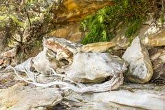 Sandsteinfelsen und -treibholz stockfotos