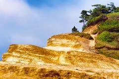 Sandsteinklippen und -bäume am Kap Kiwanda Lizenzfreie Stockfotografie