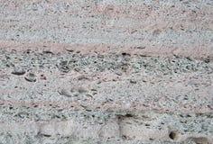 Sandsten från snäckskal Textur och bakgrund av stenen arkivbilder