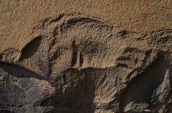 Sandsten med ett lättnadsavbrott Fotografering för Bildbyråer