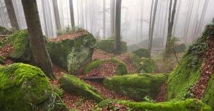 Sandsten vaggar i dimmig skog Royaltyfria Foton