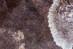 Sandstenbakgrund har den vita formen royaltyfri foto
